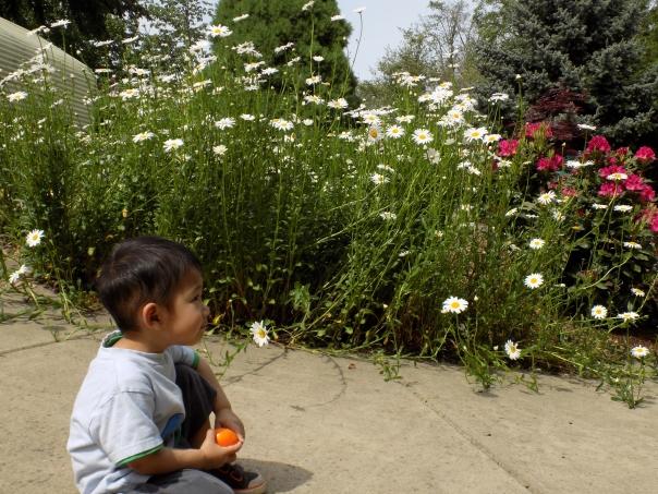 Scholl's Garden 2016 (7)