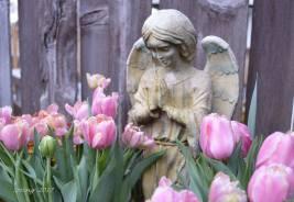 Angel's garden 2017 -sm1 -