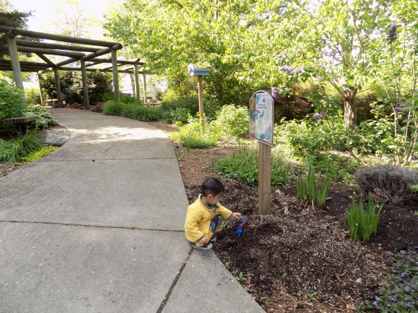 April's Flowers in School Garden (12)