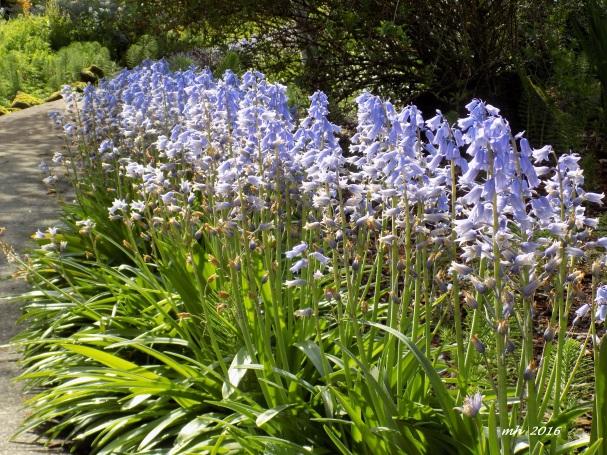 April's Flowers in School Garden (18)