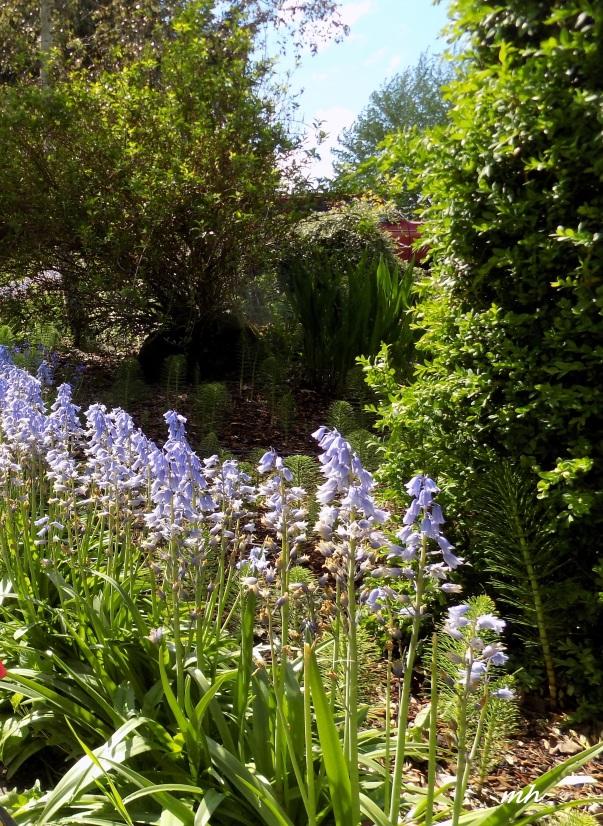 April's Flowers in School Garden (2)