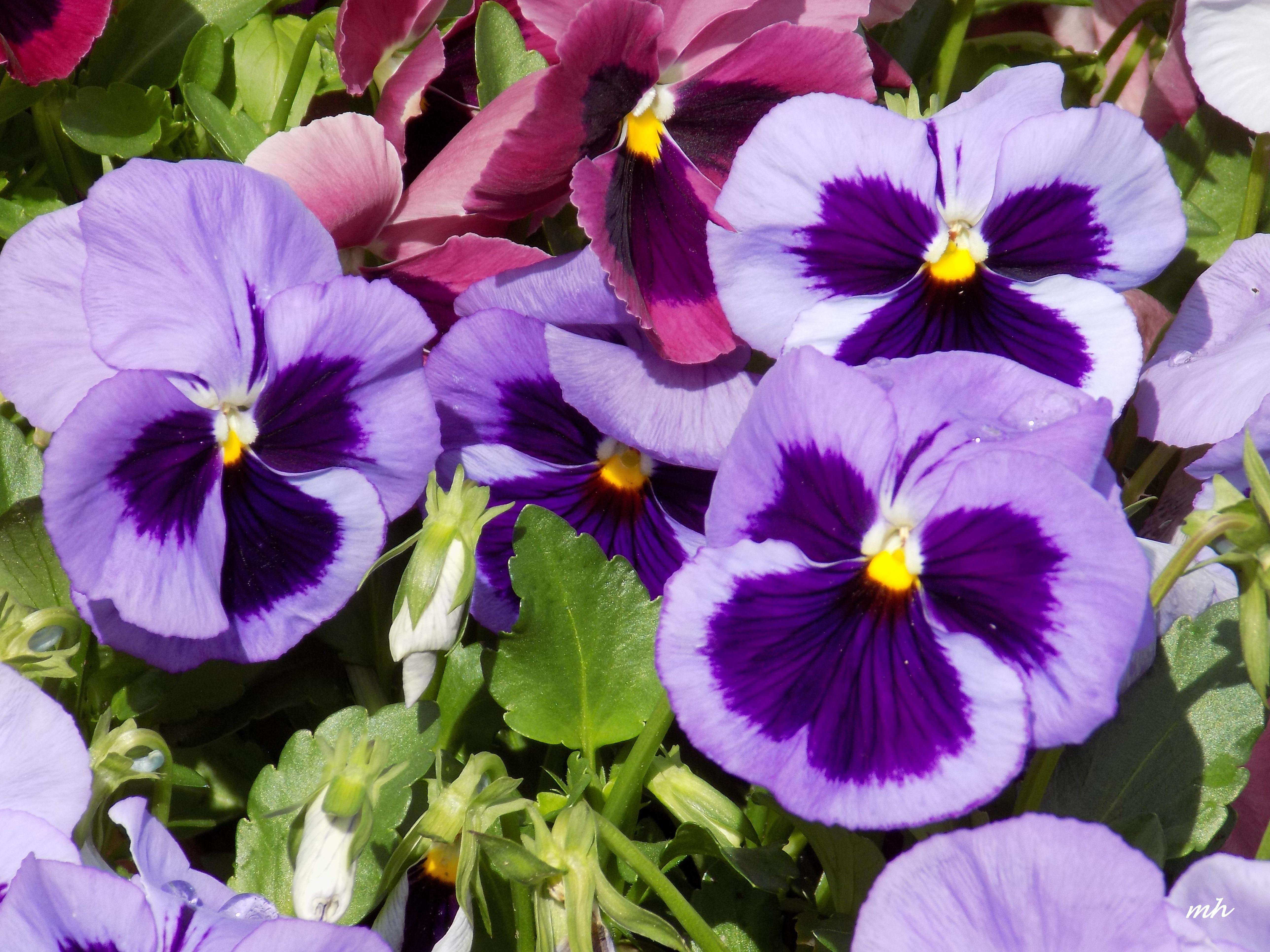 April's Flowers in School Garden (3)