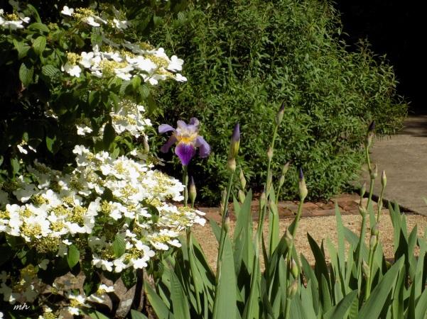 April's Flowers in School Garden (4)