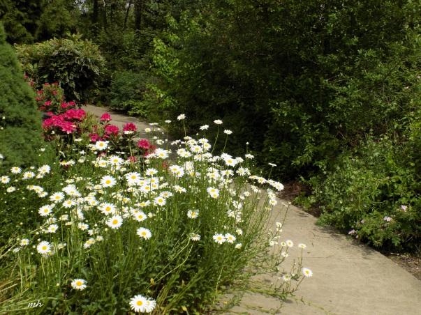 Scholl's Garden 2016 (6)