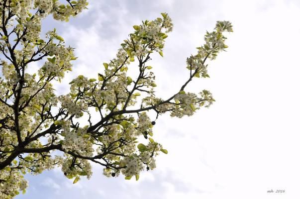 Spring! -2sm -