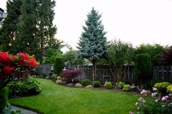 Back Yard Garden 2016 (2)