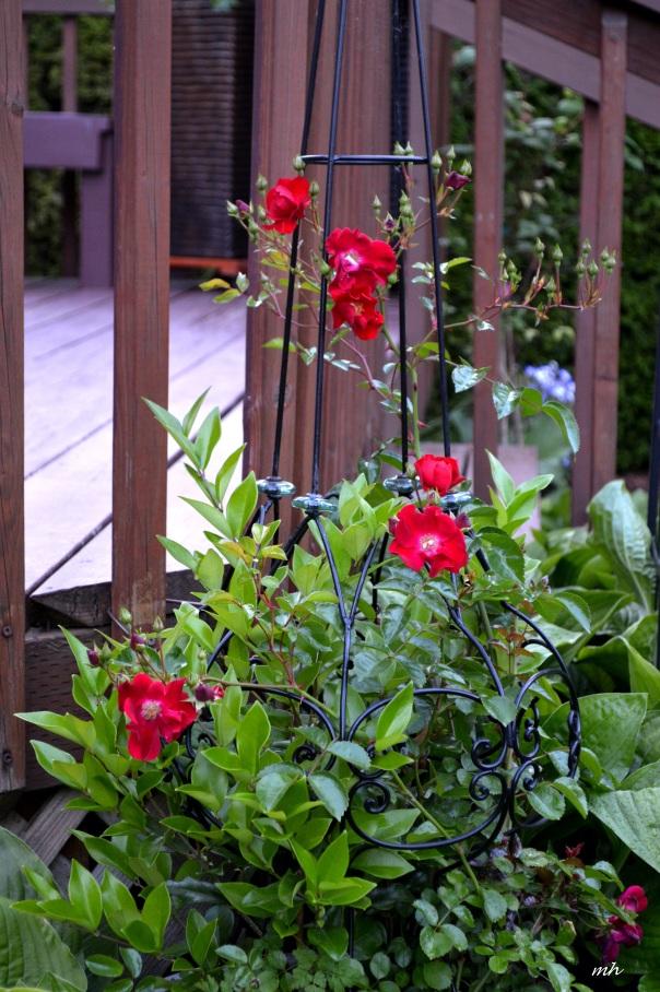 Back Yard Garden 2016 (9)