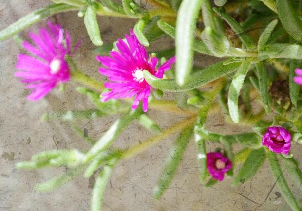 Hoa muoi gio - mh88