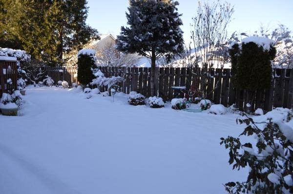 snow-jan-12-4