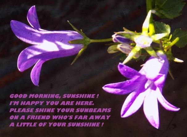 Good Morning sunshine! (4)