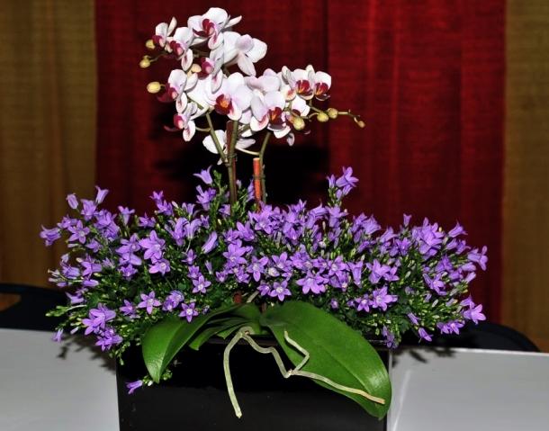 Hoa Cat canh 2016