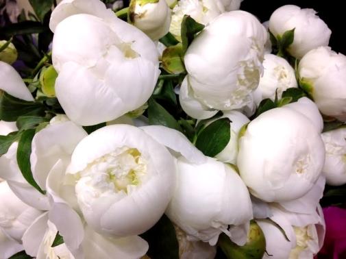 Hoa mau don trang