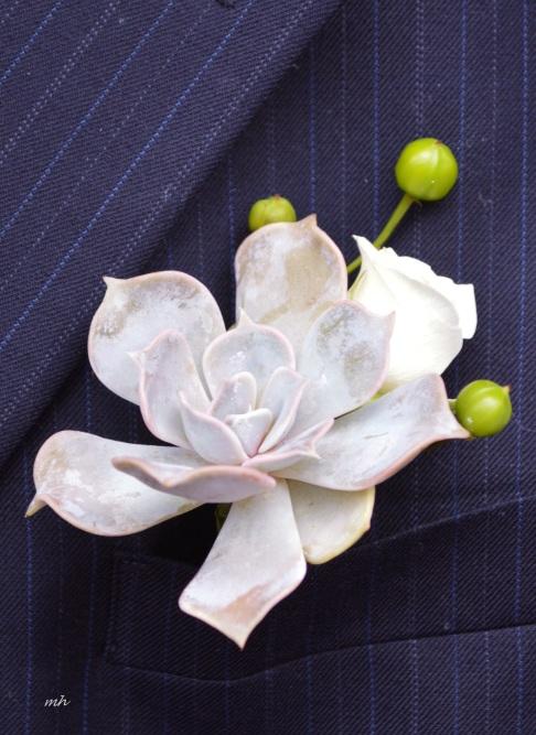 Succulents mint gray -8a