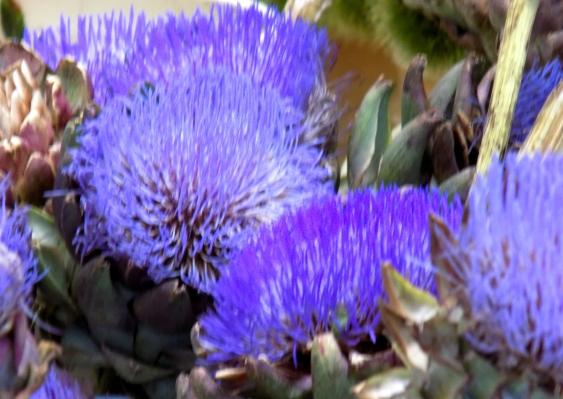 Atiso Flowers -8