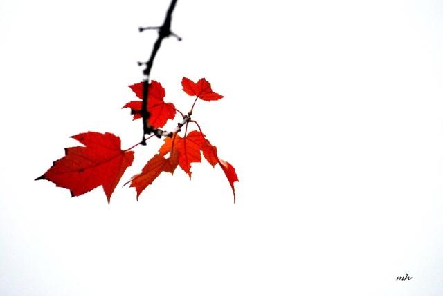 Autumn 2015 (h)  (30)