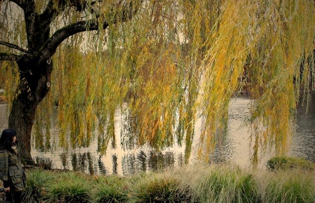 autumn-2014-1