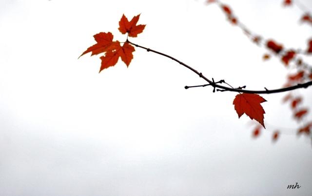 autumn-2015-h-1