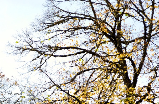 autumn-linden-leaves-4