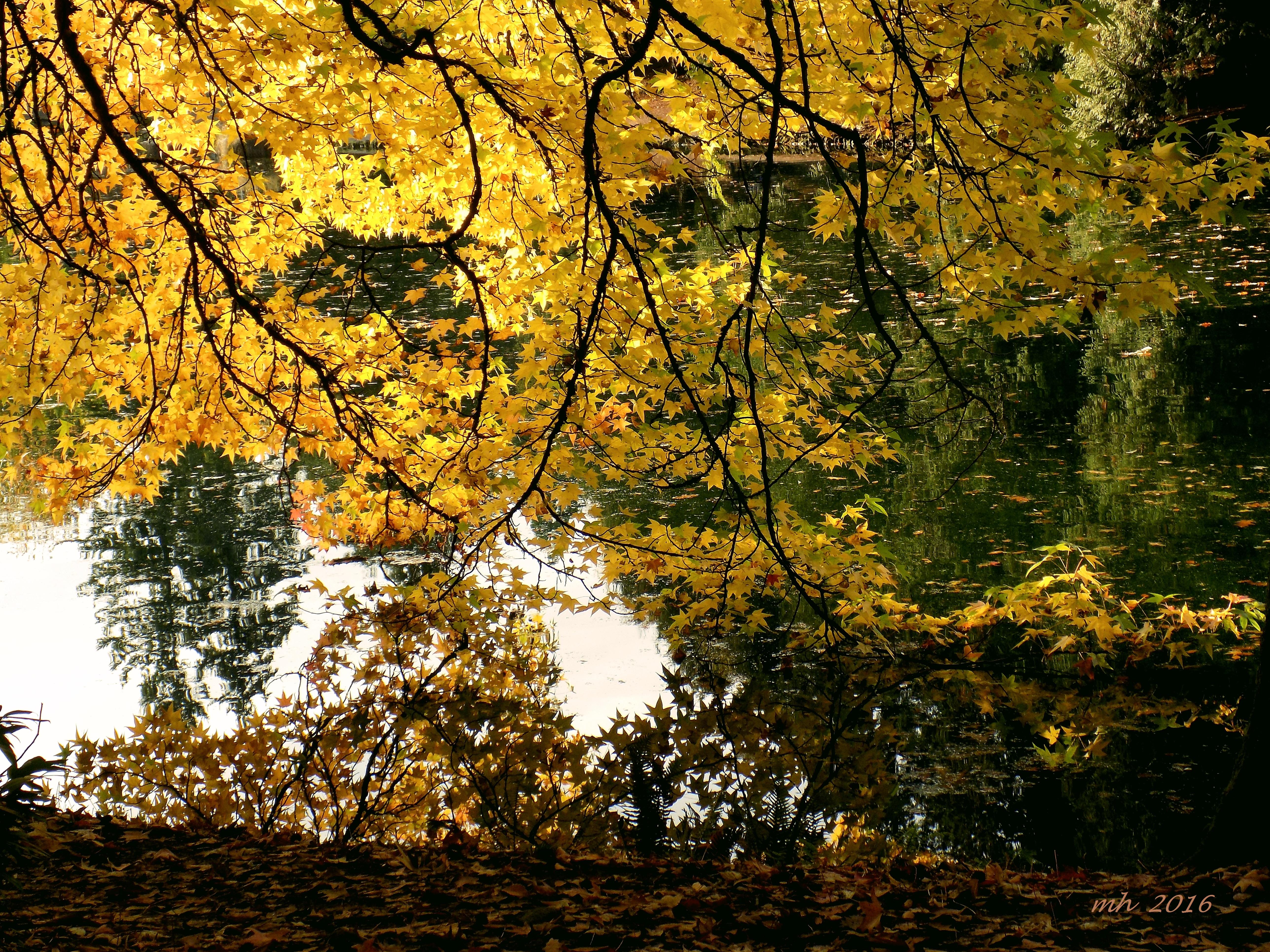 laurelhurst-park-2016-in-portland