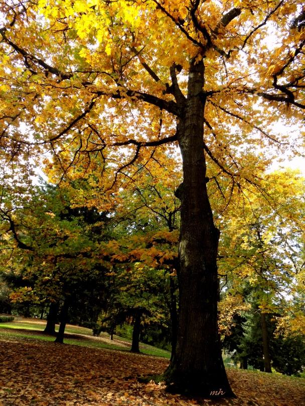 Laurelhurst Park in Portland 2016  - 5 -.jpg