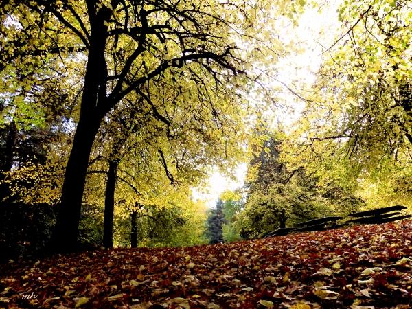 linden-trees-in-portlandslaurelhurst-park-oct-2016-gc