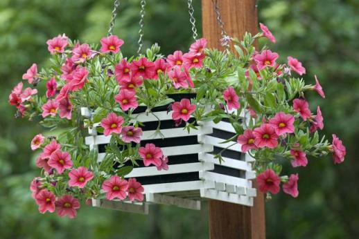 million-bells-the-joy-of-plants