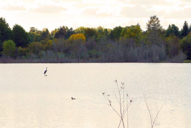 Autumn reflections - 2sm. -