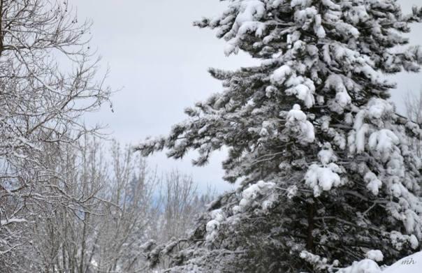 january-2017s-snow-sm-12