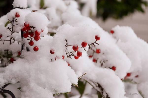 snow-2017-sm-size-1