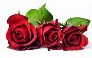 Cách tặng hoa hồng ngày valentine 04
