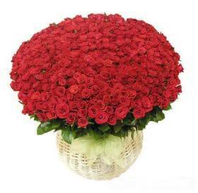 365 bông hồng