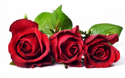 3 bông hoa hồng sinh nhật