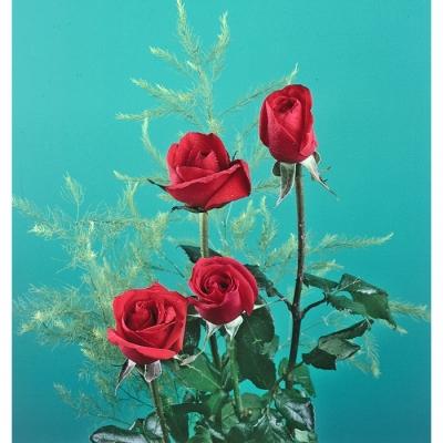 4 bông hồng sinh nhật