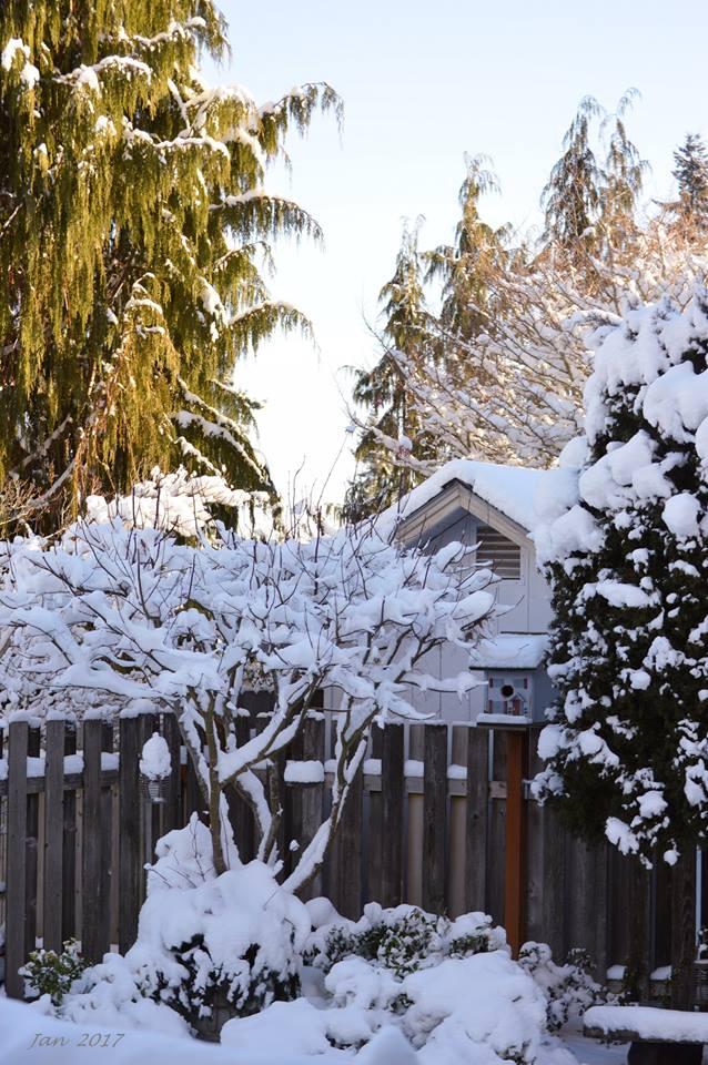 snow-2017-chup-duoc-tu-o-cua-noi-ban-viet-11