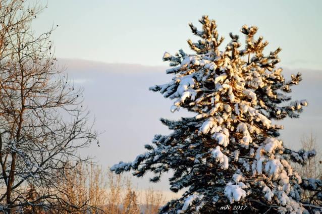 snow-2017-chup-duoc-tu-o-cua-noi-ban-viet-4