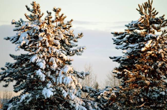 snow-2017-chup-duoc-tu-o-cua-noi-ban-viet-9