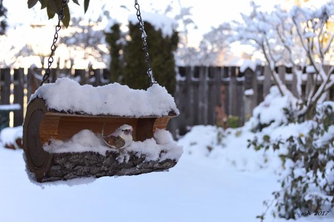 snow-jan-12-6