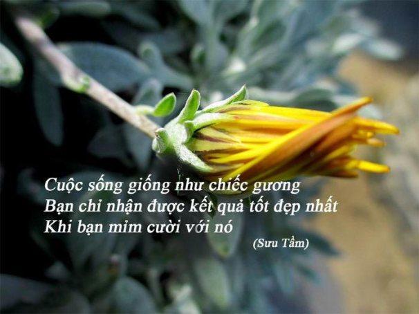 tong_hop_nhung_danh_ngon_cau_noi_hay_ve_cuoc_song4 (1)