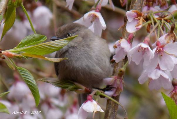 Spring's Birds 2017