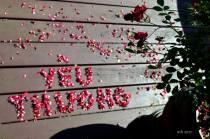 yeu thuong (sm )