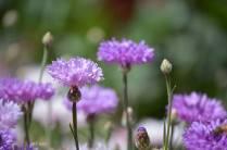 Wildflowers 2017 -sm 3 .-