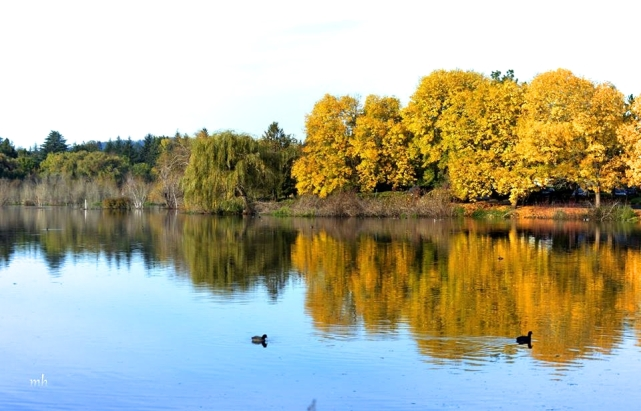 Autumn reflections - 1sm. -