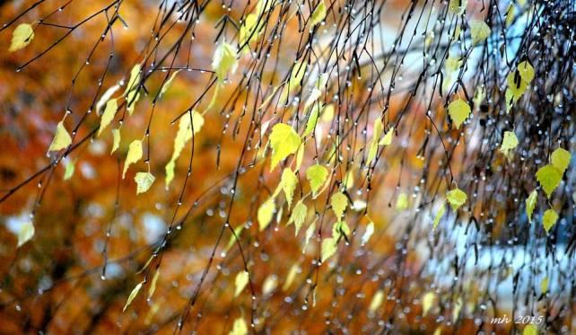 Autumn ( sm 9 )