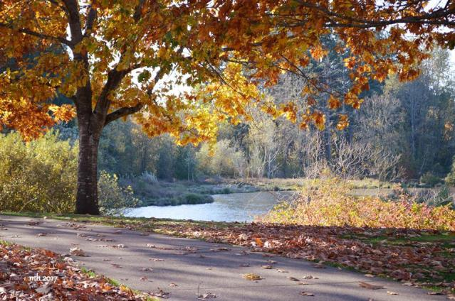 Summerlake Park (sm )