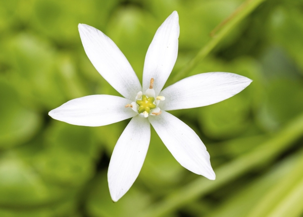 star-of-bethlehem-Meaning- Atonement, Satisfaction