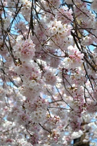 Hello Spring! (sm5)