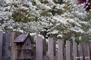 White Dogwood - sm 2 -